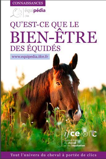 Bien-être des chevaux de sport / loisir