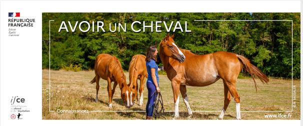 """Lettre d'information """"Avoir un cheval"""" juin 2021"""